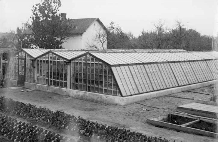 A Gyenes kertészet agrártörténeti értékű üvegházai