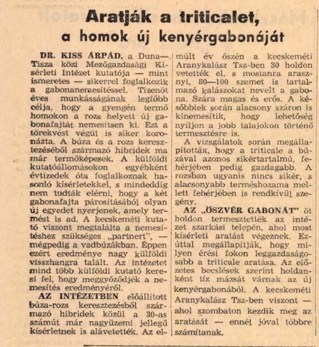 Aratják a triticalet, a homok új kenyérgabonáját In: Petőfi népe. - 20. évf. 161. sz. (1965. júl. 10.), p. 3.